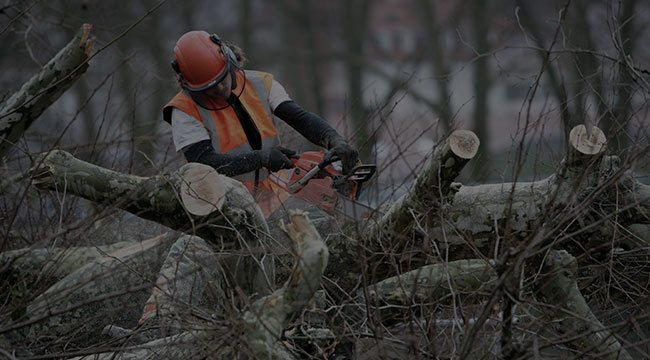 Lakeville Tree Care