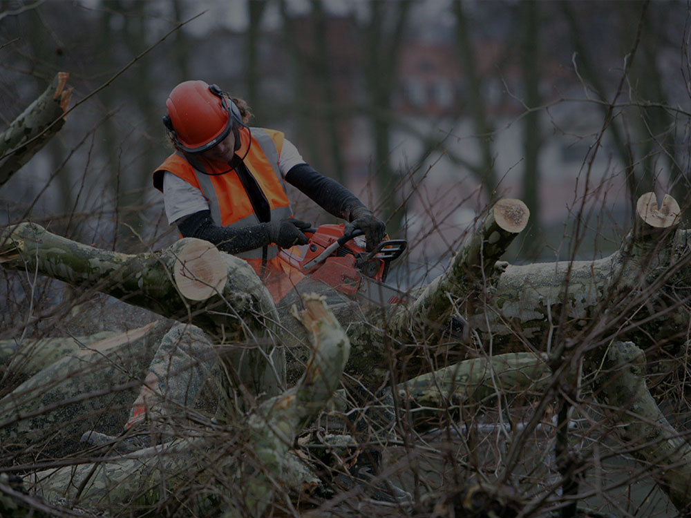 Lakeville Tree Care/