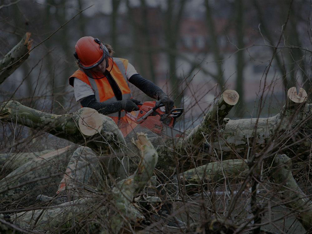 Apple Valley Tree Care/